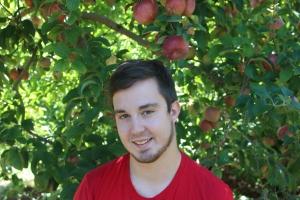 apples 289