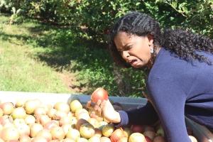 apples 309