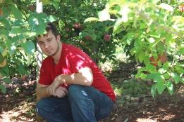 apples 320