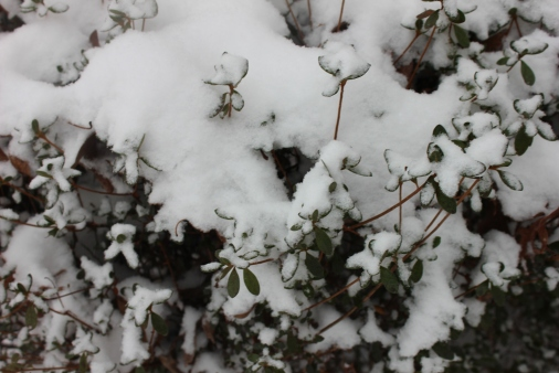 snow 096